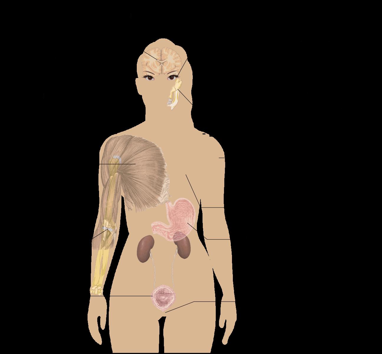 I 100 sintomi della fibromialgia